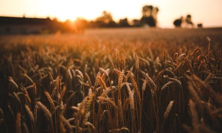 Matthew 9:27-10:4:  The Harvest is Plentiful, but it Could Go to Waste